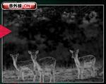 双眼鏡型ナイトビジョン 暗視スコープ  スパイダーズX PRO (PR-817)の赤外線撮影写真